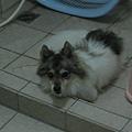 什麼?你在看我嗎?