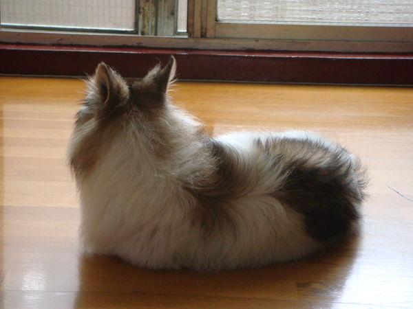 是貓咪還是狗狗?