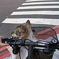 坐在腳踏車上吹風很舒服齁~