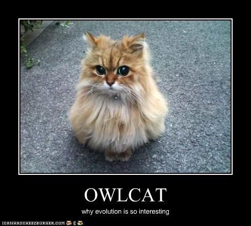 owlcat.jpg