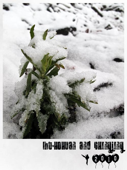 合歡山賞雪1.jpg
