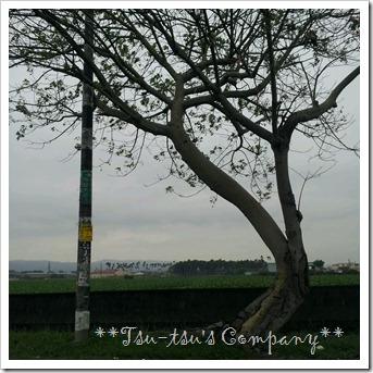2012-12-30-12-04-06_photo