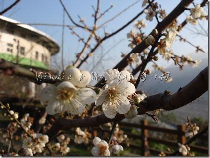 20100110信義梅花 130