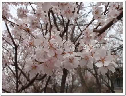 20100408~11名古屋 546