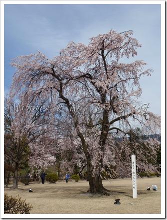 20100408~11名古屋 636