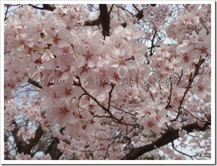 20100408~11名古屋 648