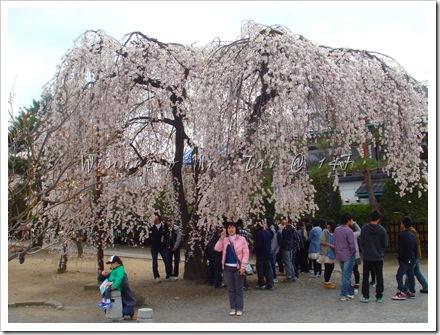 20100408~11名古屋 1638