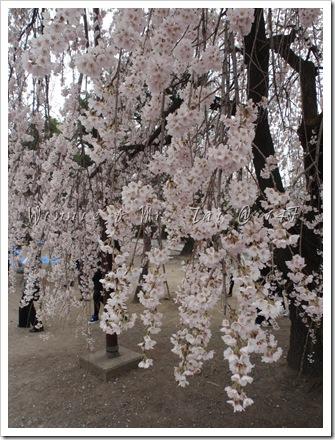 20100408~11名古屋 693
