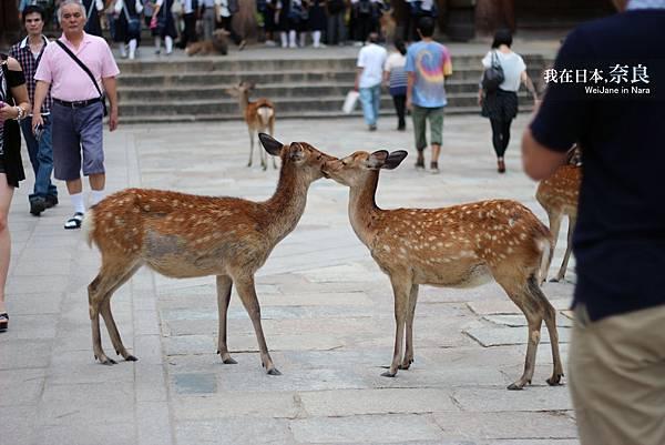 相親相愛鹿
