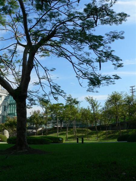 夏日的朝陽校園
