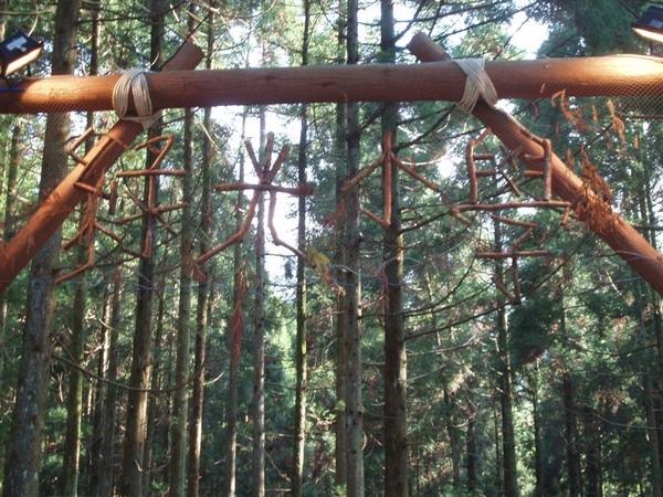 綠光森林-綠光小學