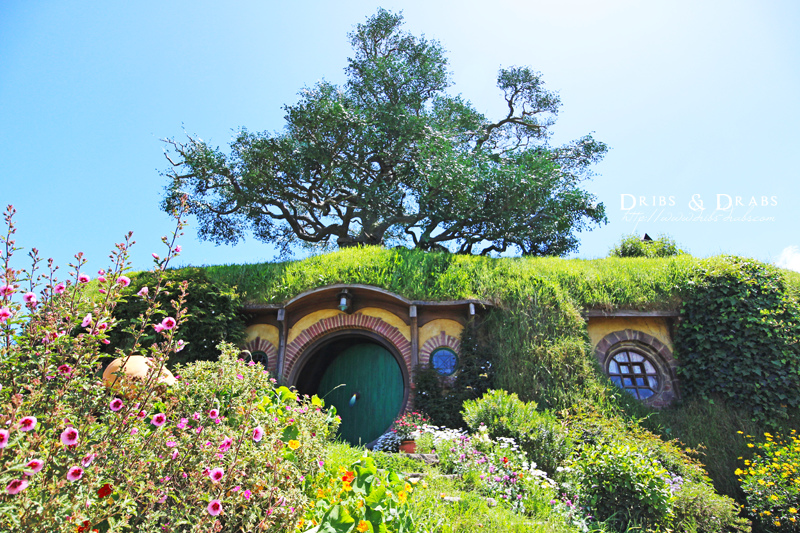 紐西蘭魔戒Hobbiton Movie Set