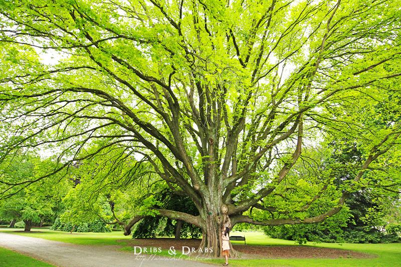 紐西蘭基督城植物園