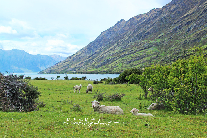 紐西蘭Lake Wanaka Lake Hawea