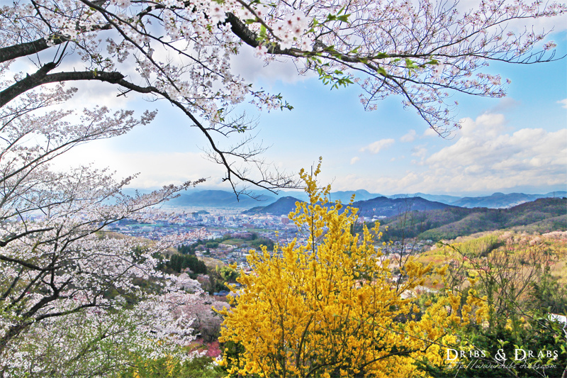 福島賞櫻景點花見山公園