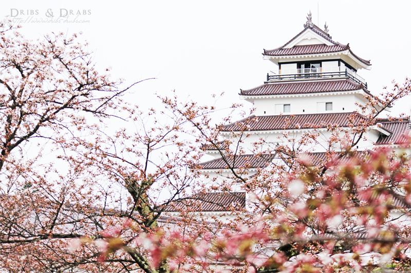 福島賞櫻景點鶴城會津若松城