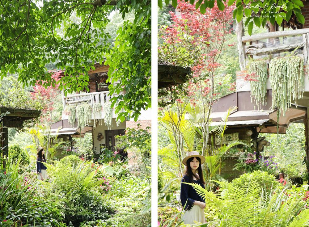 苗栗南庄景觀餐廳山行玫瑰01.jpg