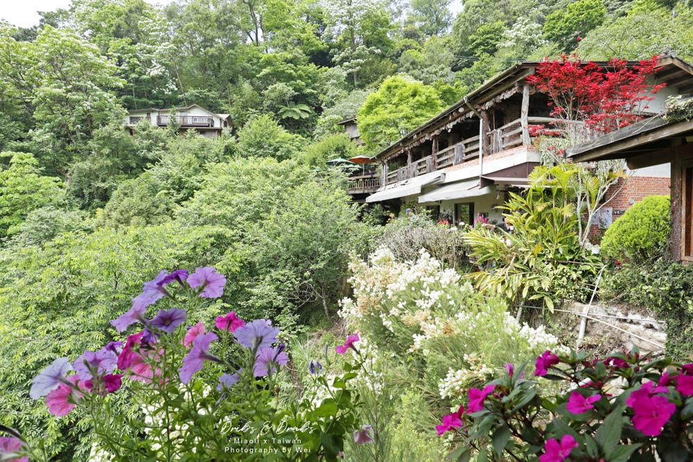 苗栗南庄景觀餐廳山行玫瑰13.jpg
