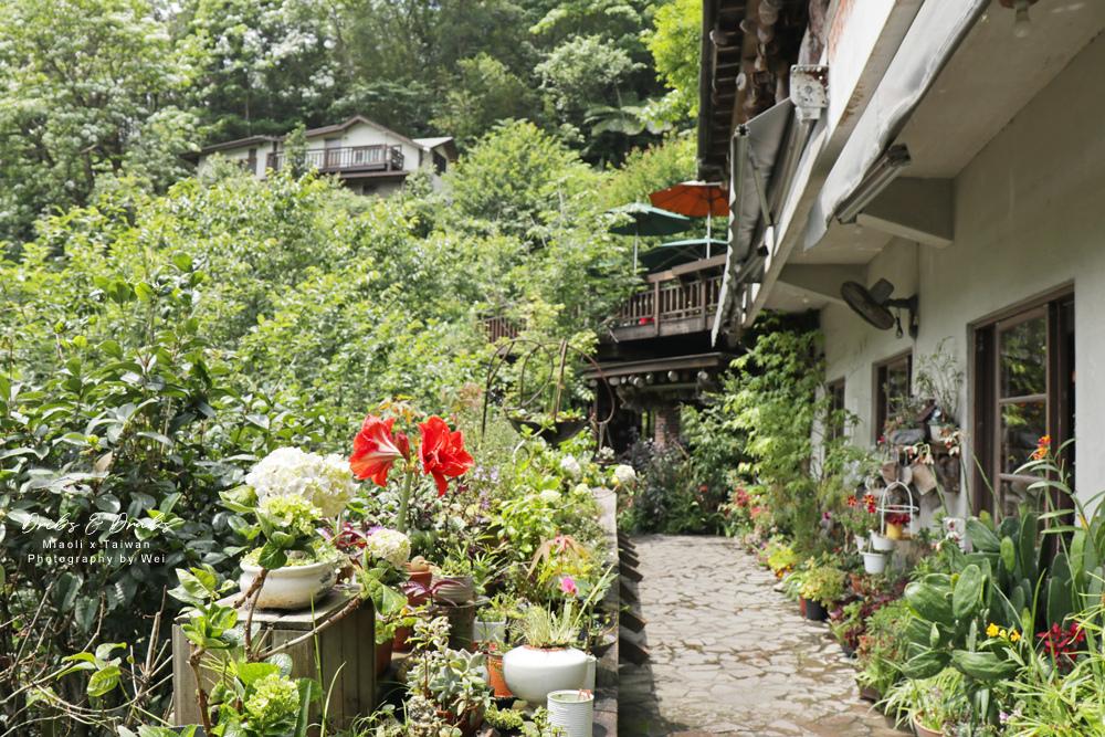 苗栗南庄景觀餐廳山行玫瑰16.jpg