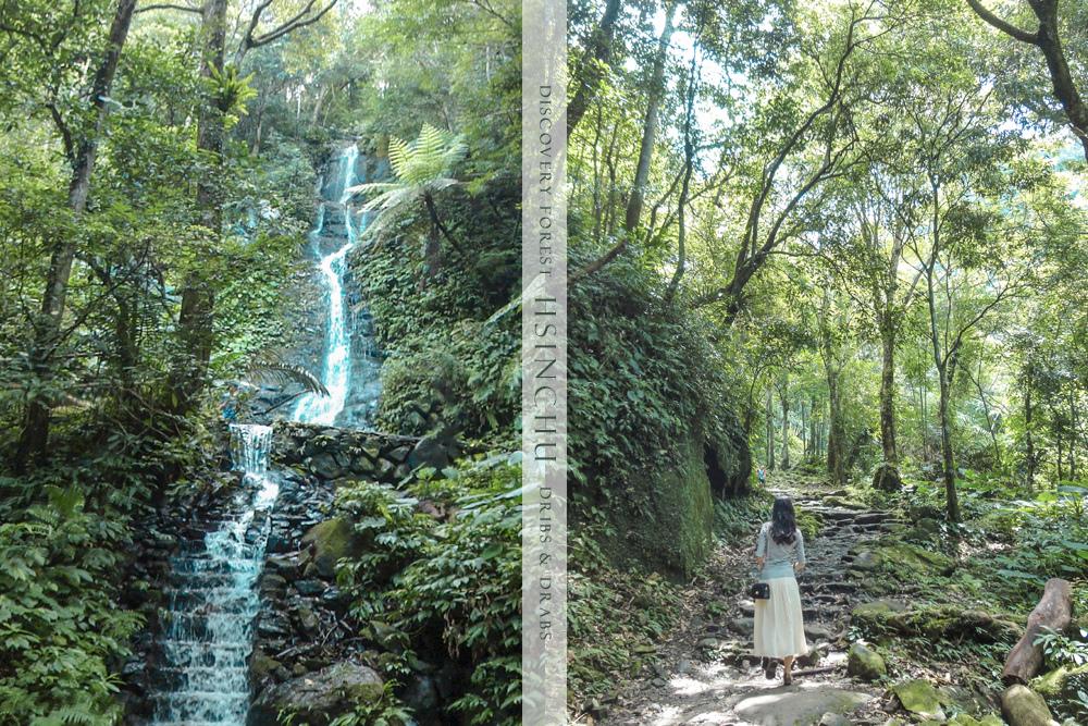 新竹馬武督森林