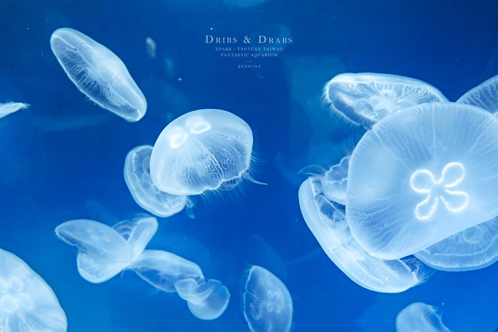 桃園XPARK水族館09.jpg
