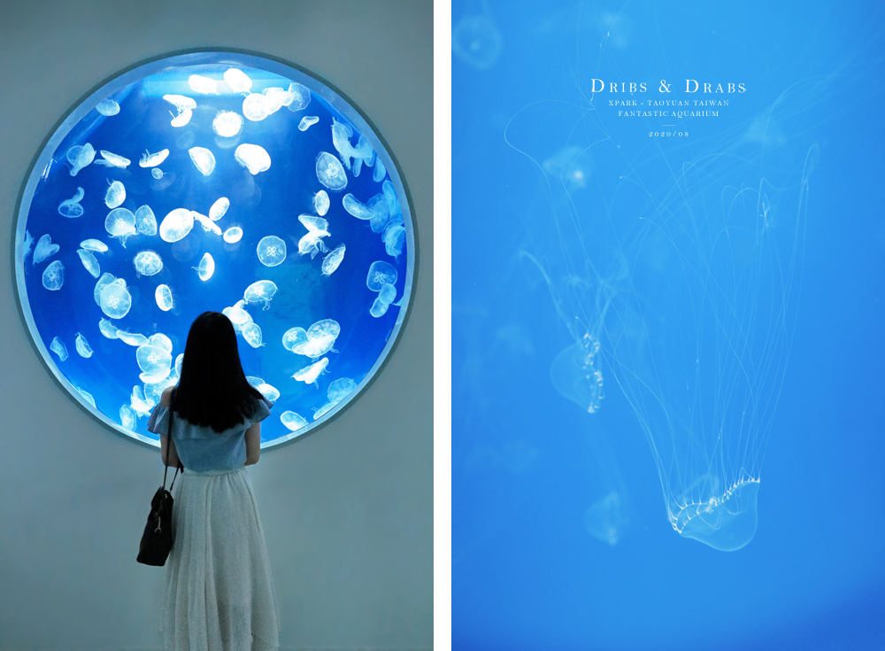 桃園XPARK水族館10.jpg