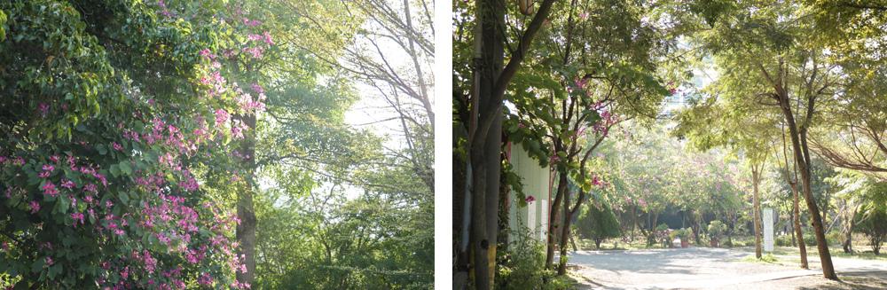 台南十鼓仁糖文化園區14.jpg