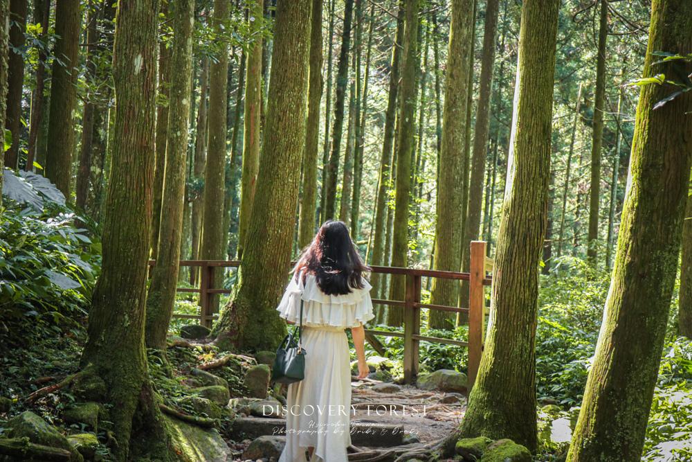 新竹馬武督探索森林綠光小學14.jpg