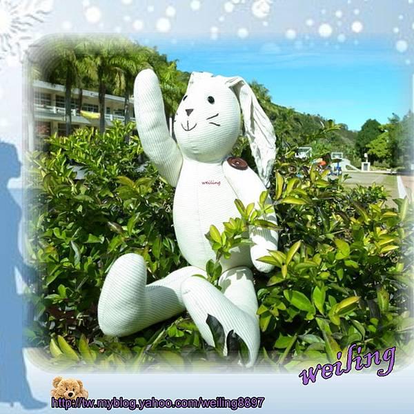 rabbit(4).jpg