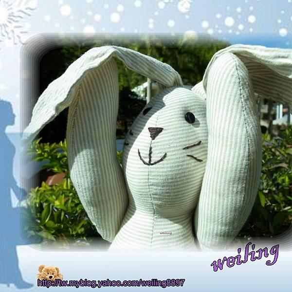 rabbit(1).jpg