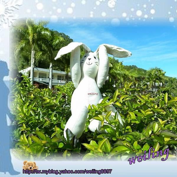 rabbit(2).jpg