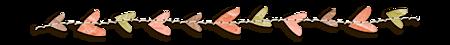 zpearn-serenity-blog-separator-2