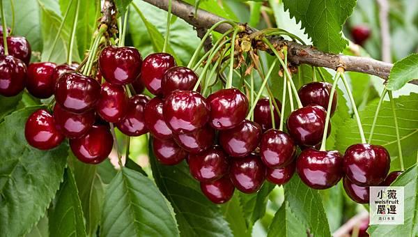 Cherry Horizontal-1.jpg