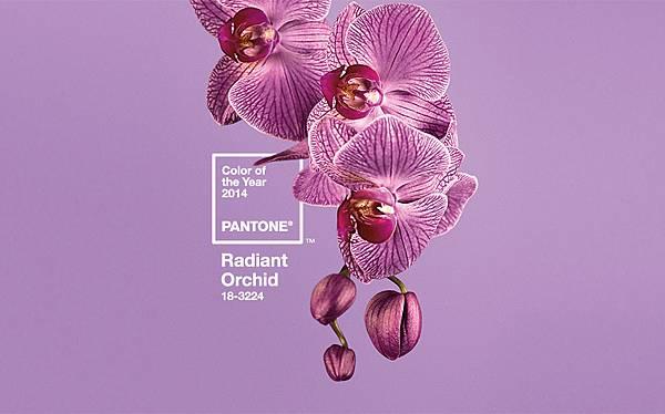 Radiant Orchid 蘭花紫