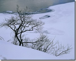 wallcoo_com_Snow_Winter_Scene_Snow_Covered_branches_MIL50002