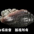 C0368k_壽山石_仙遊_寄居蟹(林樹岳)