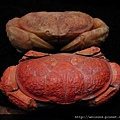 C0329_壽山石_螃蟹