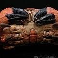 C0329_壽山石_螃蟹-2