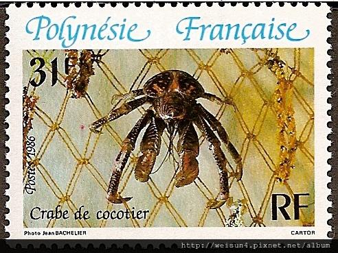 40-08_C1056-02_椰子蟹