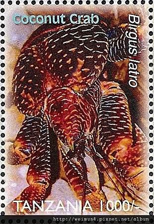 40-22_C1433_椰子蟹
