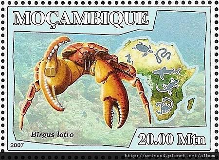 40-23_C1013-04_椰子蟹