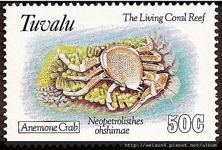 42-01_C1078_瓷蟹科_紅斑新岩瓷蟹