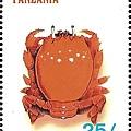 03-05_C1173_01_蛙蟹科_蛙形蟹