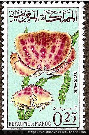 05-04_C1129_饅頭蟹科_顆粒饅頭蟹
