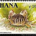 05-07_C0182-01_饅頭蟹科_紅斑饅頭蟹