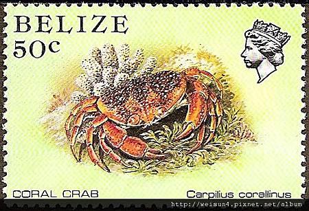 09-03_C1128_瓢蟹科_珊瑚瓢蟹