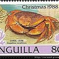 09-04_C1025_瓢蟹科_珊瑚瓢蟹