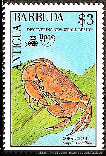09-05_C0399_瓢蟹科_珊瑚瓢蟹