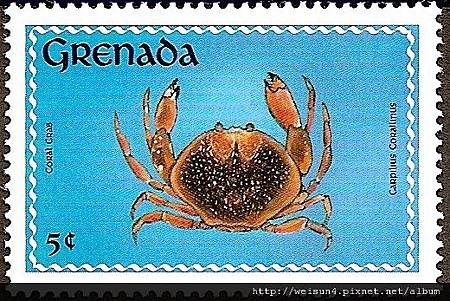 09-06_C0175-02_瓢蟹科_珊瑚瓢蟹