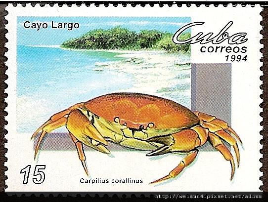 09-08_C0733_瓢蟹科_珊瑚瓢蟹